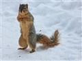 Cute Posing Squirrel