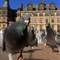 Pigeon Perspective