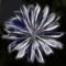 PIC10785-div-fr-crop-canvas-txt-newtxt-nocan-WEB - kopie