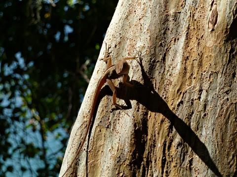 Lizard1010276