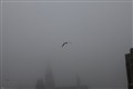 Gull in Fog-1