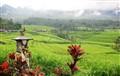 Jatiluwih rice terrace - Bali, Indonesia