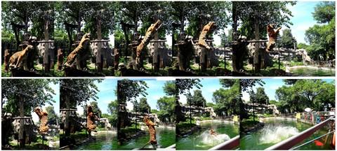 edited tiger 2
