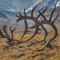 denali 2018 d5-9606 s: antlers in alaska's denali national park