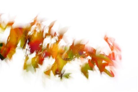 autumnstorm17