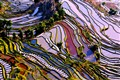 Yuanyang Terraced Field, Yunnan, China