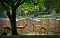 Deers Park.