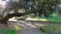 Sunol Regional Park, Calif.