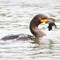 cormorant with leaf small