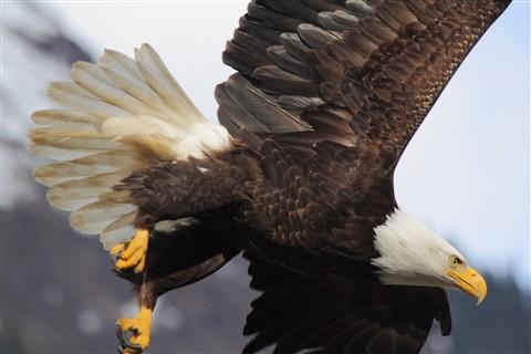 summer eagle 002