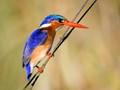 Taken in Okavango Delta