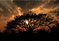 Sunset Tree....