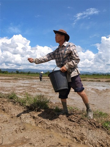 Rice sower 2