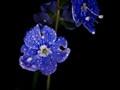 Blu nel pinto di blu