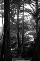 Slender Wood