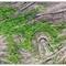 P4135481 Lichen Topography