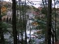 Dam Trees