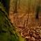 november woods11