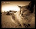 Lost kitten...