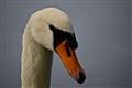 Cristal Swan