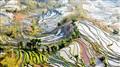 Yuanyang Terraced Field, Yunnan, China