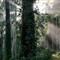 Redwoods Sequoia Park Eureka CA USA 1/13sec ISO 200 ev -1.7 f9 40mm