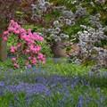 Lytham Hall: Bluebells, Blossom and Flower