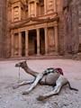 Jordan - Petra Camel