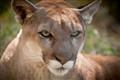 20081009_Wichita_Zoo_3196