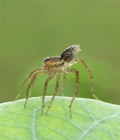 spider4 (Custom)