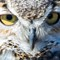Great Horned Owl-63