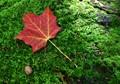 Maple leaf forever...