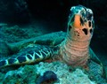 Turtle2, Dili Rock, September 30 10