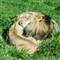 SB Zoo_048_2012