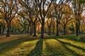 Central Park 2011
