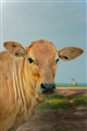 Cow's Portrait