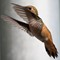 Rufous Hummingbird Powering Up