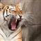 '10_Zoo Safari_91_3