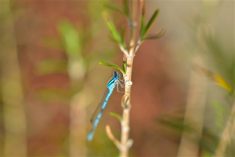 BlueInsect122712