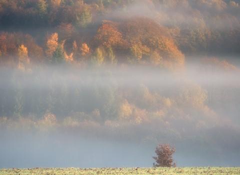 AutumnTowersF