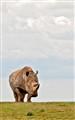 Rhino Hill
