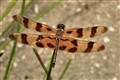 dragonfly_01_small
