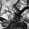 Winter Tree (1 of 1)