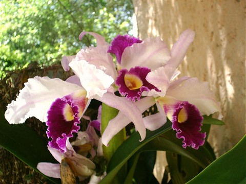 orchid_09