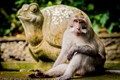 Taken in Bali's famous Sacred Monkey Forest where all the monkeys are free to roam around as they please.