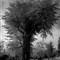 20091030-scary tree