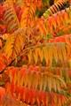 Autumn Drapery