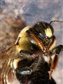 Dead Carpenter Bees,  DDSC04474