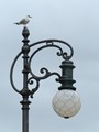Seagull on the lamp