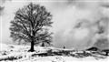 tree silhouette 01